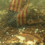 Oil covered crab with American flag